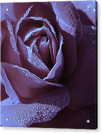 A Rose That Glitters Acrylic Print by Michelle Ayn Potter