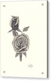 Acrylic Print featuring the drawing A Roses Beauty by Patricia Hiltz