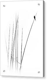 A Sabbatical Acrylic Print
