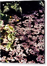 A Sea Of Pink Acrylic Print