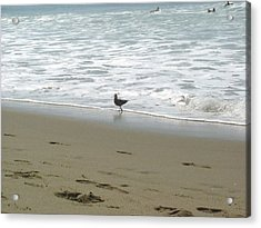 Acrylic Print featuring the pyrography A Seagull Playing With Waves by Hiroko Sakai