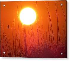 A Seagull's Sunrise Acrylic Print
