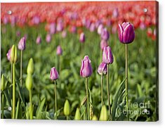 A Select Few Acrylic Print by Nick  Boren