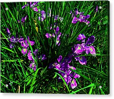 A Sign Of Spring Acrylic Print by Steve Battle