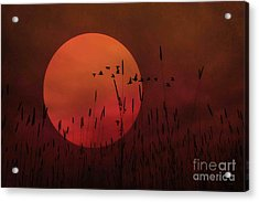 A Simple Sunset In June Acrylic Print by Tom York Images