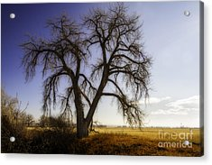 Acrylic Print featuring the photograph A Simple Tree by Kristal Kraft