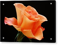 A Single Bloom 1 Acrylic Print