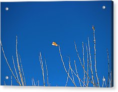 Acrylic Print featuring the photograph A Single Leaf by Rima Biswas