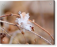 Acrylic Print featuring the photograph A Single Snowflake by Candice Trimble