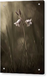 A Small Flower On The Ground Acrylic Print