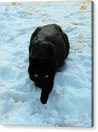 A Small Panther In The Snow Acrylic Print by Cheryl Poland