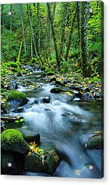 A Small Song In The Big Beauty Acrylic Print by Jeff Swan
