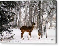 A Snowy Path Acrylic Print by Elizabeth Winter