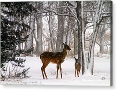 A Snowy Path Acrylic Print