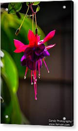 Acrylic Print featuring the photograph A Special Red Flower  by Gandz Photography