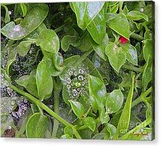 A Spider's Web Acrylic Print by Kenny Bosak