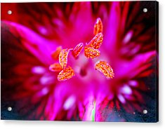 Acrylic Print featuring the photograph A Splash Of Colour by Wendy Wilton