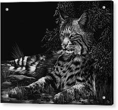 A Spot Of Shade Acrylic Print by Heather Ward