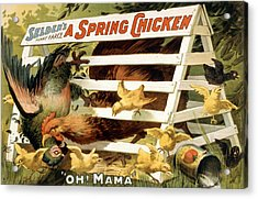 A Spring Chicken Acrylic Print by Aged Pixel