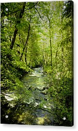 A Spring Day At Lithia Creek Acrylic Print by Diane Schuster