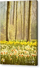 A Spring Day Acrylic Print