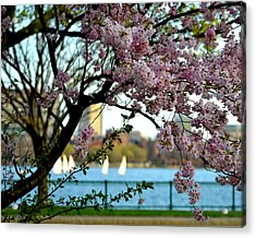 A Spring Day On The Charles River Acrylic Print by Toby McGuire