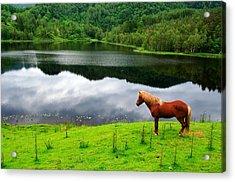 A Stallion Watching His Kingdom Acrylic Print
