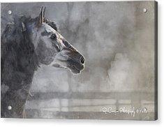 A Stallions Pride Acrylic Print