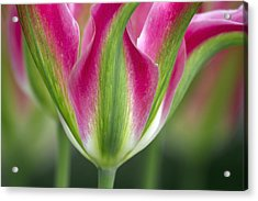 A Standout Acrylic Print