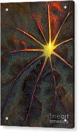 A Star Acrylic Print by Sabrina L Ryan