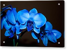 A Stem Of Beautiful Blue Orchids Acrylic Print by Sherry Hallemeier