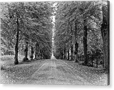 A Straightforward Path Acrylic Print