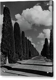 A Street Lined With Cypress Trees Acrylic Print