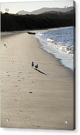 Acrylic Print featuring the photograph A Stroll Along The Beach by Debbie Cundy