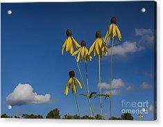 A Summer Daydream... Acrylic Print