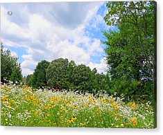 Acrylic Print featuring the photograph A Summer Meadow by Jim Whalen