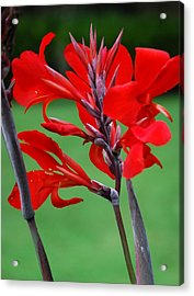 A Summer Red Flower Acrylic Print by Nancy Stutes