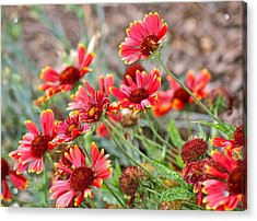 Acrylic Print featuring the photograph A Summers Breeze by Eve Spring