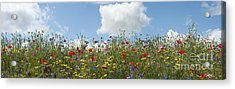 A Summers Day Acrylic Print by Tim Gainey