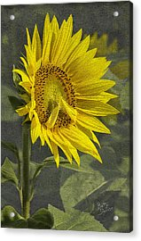 Acrylic Print featuring the photograph A Sunflower's Prayer by Betty Denise