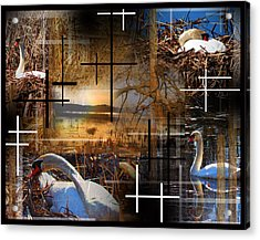 A Swans Mysterious World Acrylic Print by Andrew Sliwinski