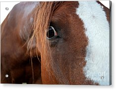 A Sweetheart's Hello Acrylic Print by Catherine Peterson