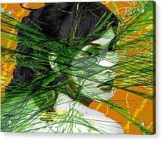 A Tangled Web Acrylic Print by Seth Weaver