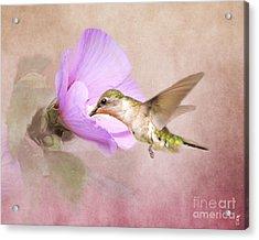 A Taste Of Nectar Acrylic Print