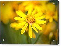 Texas Wildflower 2 Acrylic Print