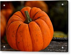 A Thanksgiving Pumpkin Acrylic Print
