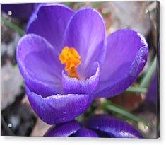 Springjoy Acrylic Print