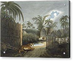 A Tiger Prowling Through A Village Acrylic Print