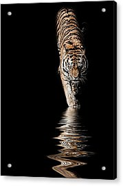 A Time To Reflect Acrylic Print by Paul Neville