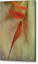 Acrylic Print featuring the photograph A Touch Of Autumn by Annie Snel